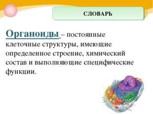 Органоиды – постоянные клеточные структуры, имеющие определенное строение, хи