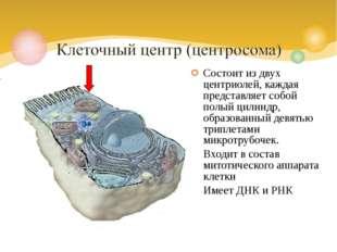 Состоит из двух центриолей, каждая представляет собой полый цилиндр, образова