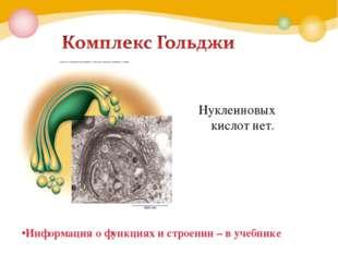 Информация о функциях и строении – в учебнике Нуклеиновых кислот нет.