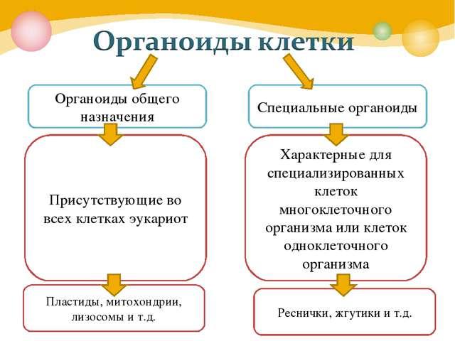 Органоиды общего назначения Специальные органоиды Присутствующие во всех клет...