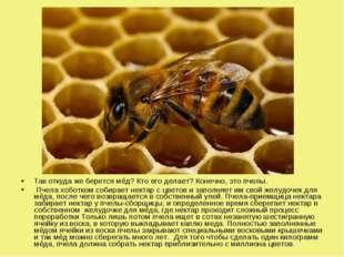 Так откуда же берется мёд? Кто его делает? Конечно, это пчелы. Пчела хоботком