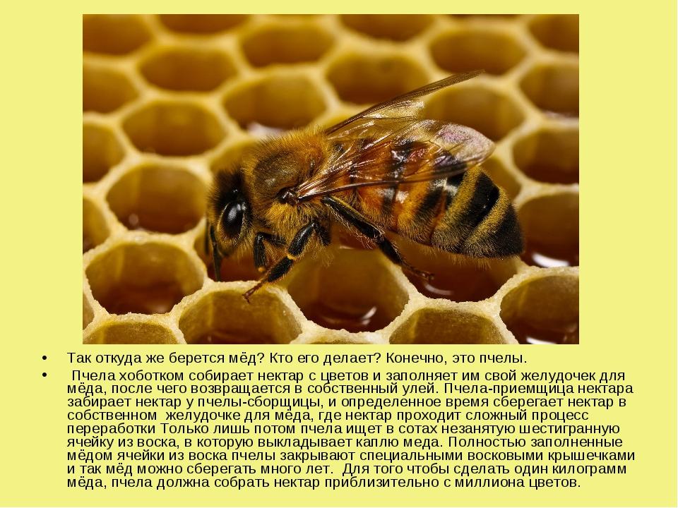 Так откуда же берется мёд? Кто его делает? Конечно, это пчелы. Пчела хоботком...