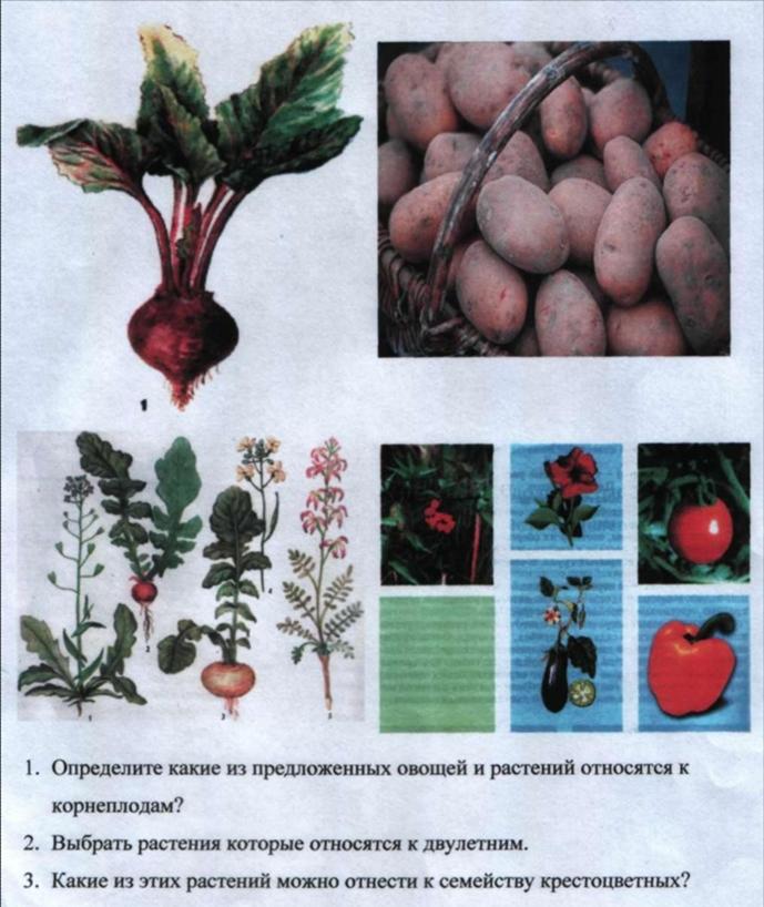 http://kor-shckola8.narod2.ru/shkola/uchebnaya_deyatelnost/vospitatelskaya_rabota/Risunok3.jpg?rand=45221840915300