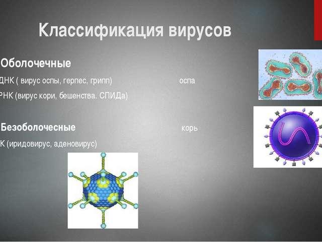Классификация вирусов Оболочечные А) ДНК ( вирус оспы, герпес, грипп) оспа Б)...