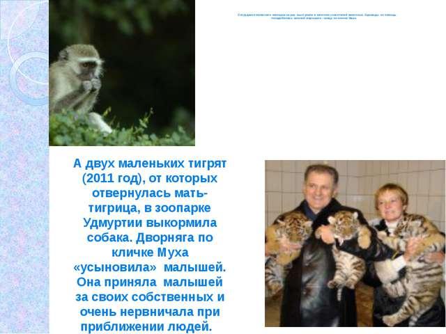 Сотрудники ижевского зоопарка не раз выступали в качестве спасителей животны...