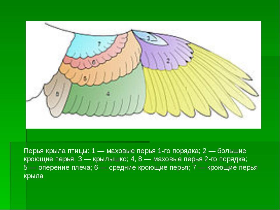 Перья крыла птицы: 1— маховые перья 1-го порядка; 2— большие кроющие перья;...