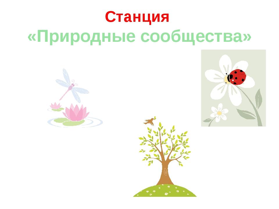 Станция «Природные сообщества»