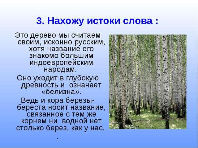 Это дерево мы считаем своим, исконно русским, хотя название его знакомо больш...