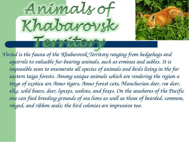 Varied is the fauna of the Khabarovsk Territory ranging from hedgehogs and sq...