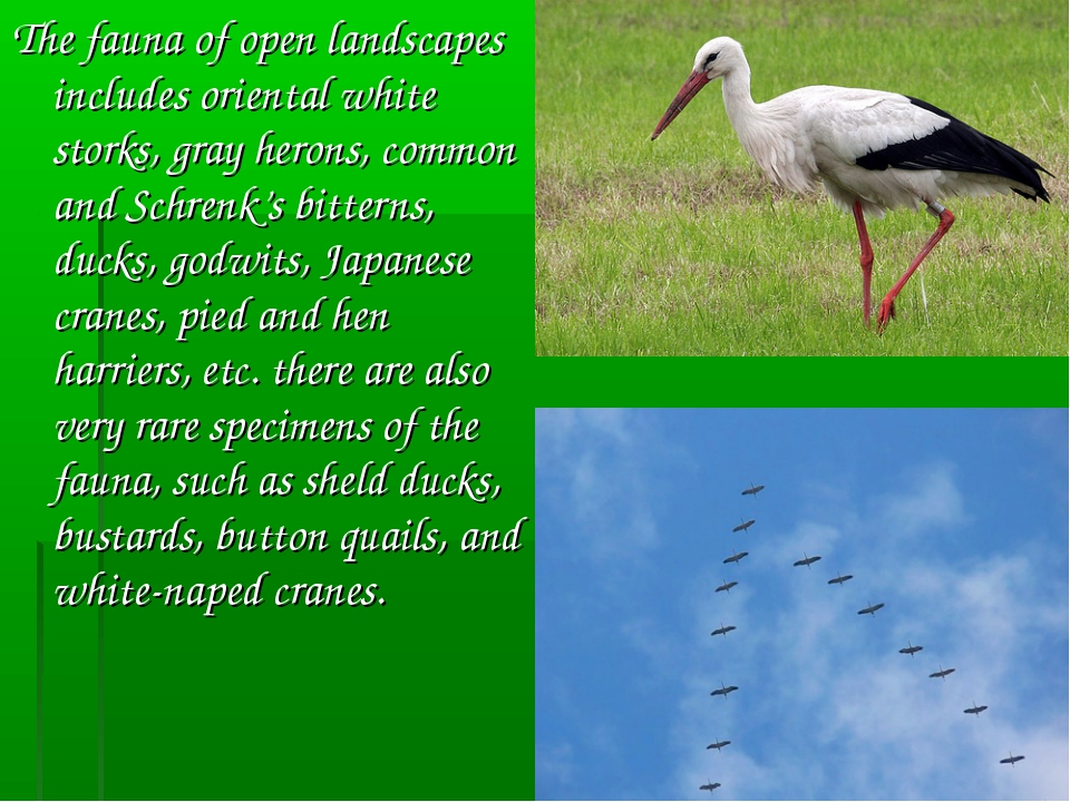 The fauna of open landscapes includes oriental white storks, gray herons, com...