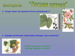 4. Плоды каких кустарников богаты витамином С? 5. Какими лечебными свойствами