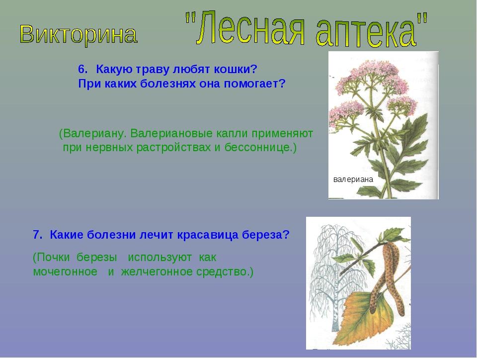 Какую траву любят кошки? При каких болезнях она помогает? (Валериану. Валериа...