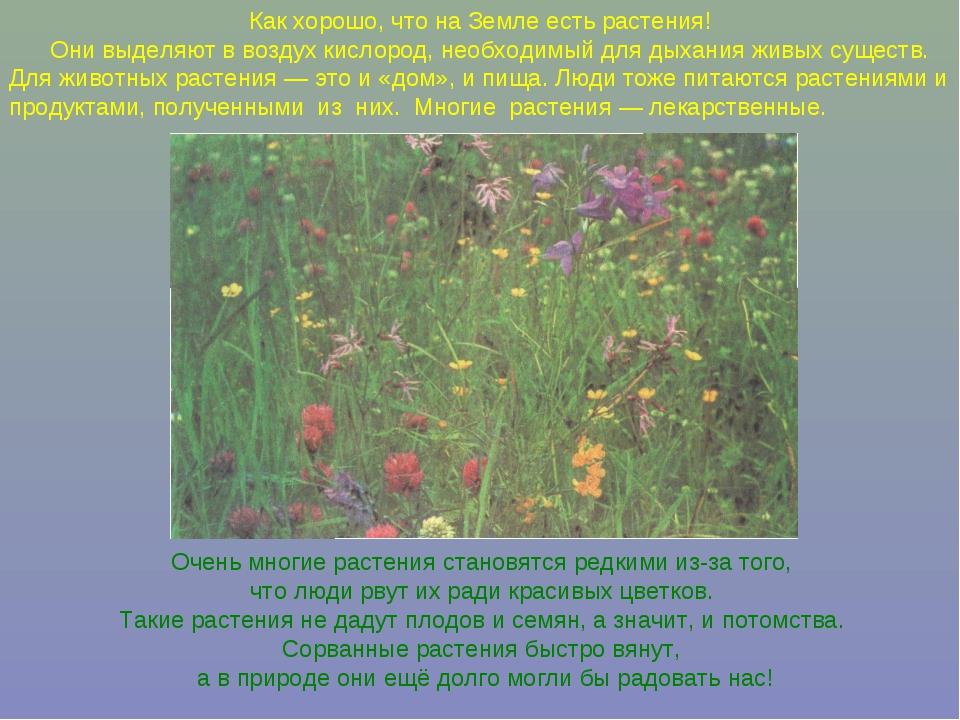 Как хорошо, что на Земле есть растения! Они выделяют в воздух кислород, необх...