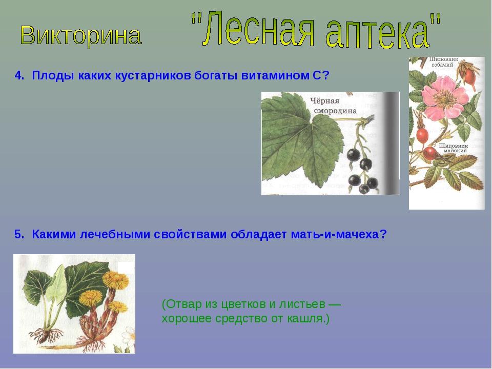 4. Плоды каких кустарников богаты витамином С? 5. Какими лечебными свойствами...