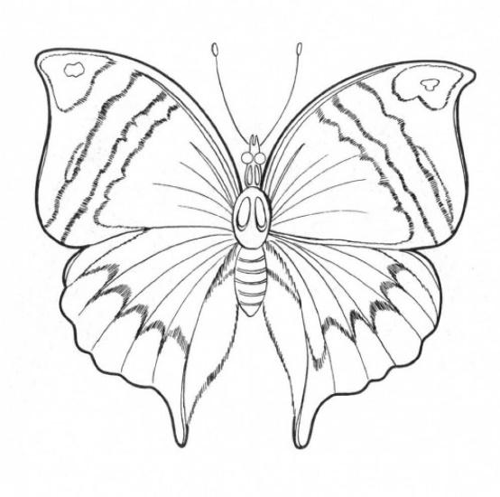 Рисунки бабочек для раскрашивания - рисунки жизнь ворам