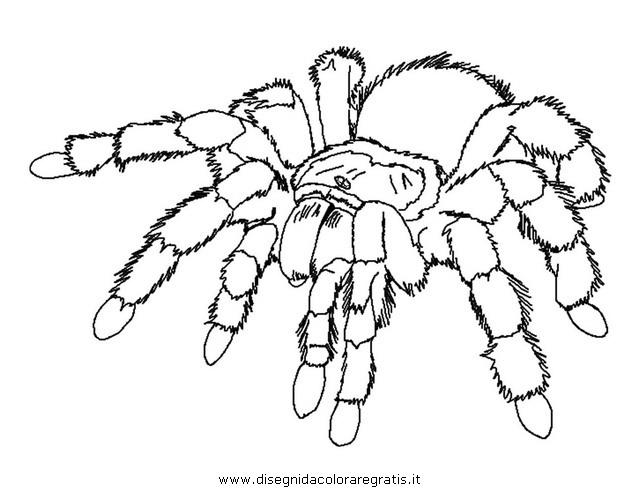 Spider Coloring Page - JoBSPapa.com