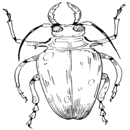 Жуки/Beetles - Эскизы (Ч&Б/Black&Grey) - Фотоальбом - arTattoo