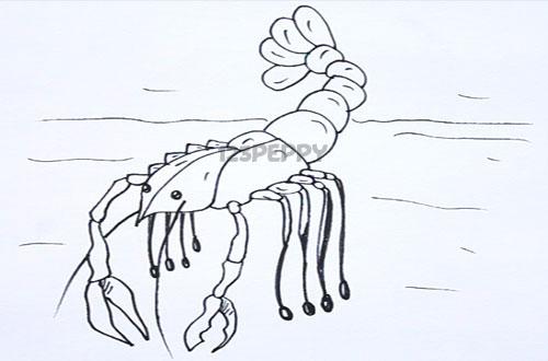 Как нарисовать рака поэтапно или пошагово карандашом. Видео Как нарисовать поэтапно, пошагово карандашом рисунок
