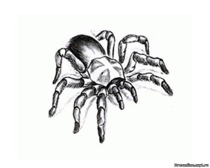 рисунок паука - рисунки