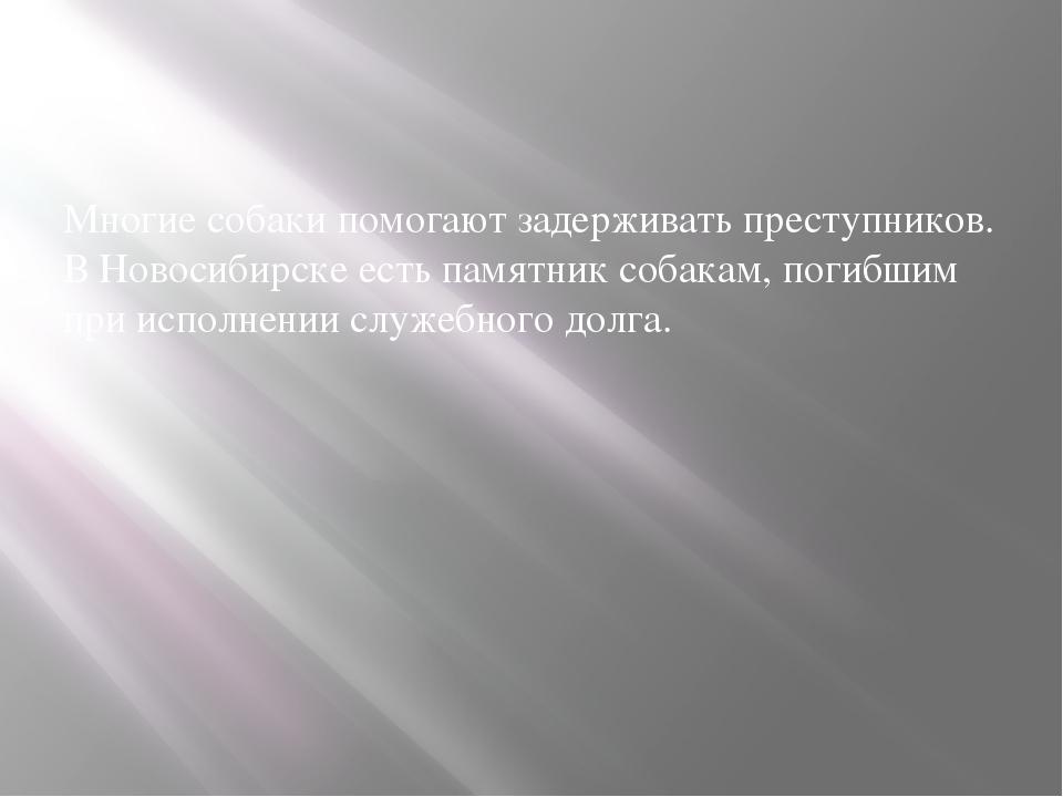 Многие собаки помогают задерживать преступников. В Новосибирске есть памятни...