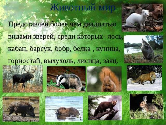 Животный мир Представлен более чем двадцатью видами зверей, среди которых- ло...