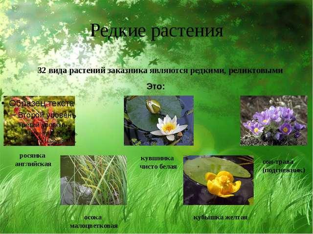 Редкие растения 32 вида растений заказника являются редкими, реликтовыми Это:...