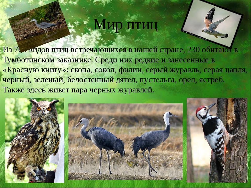 Мир птиц Из 700 видов птиц встречающихся в нашей стране, 230 обитают в Тумбот...