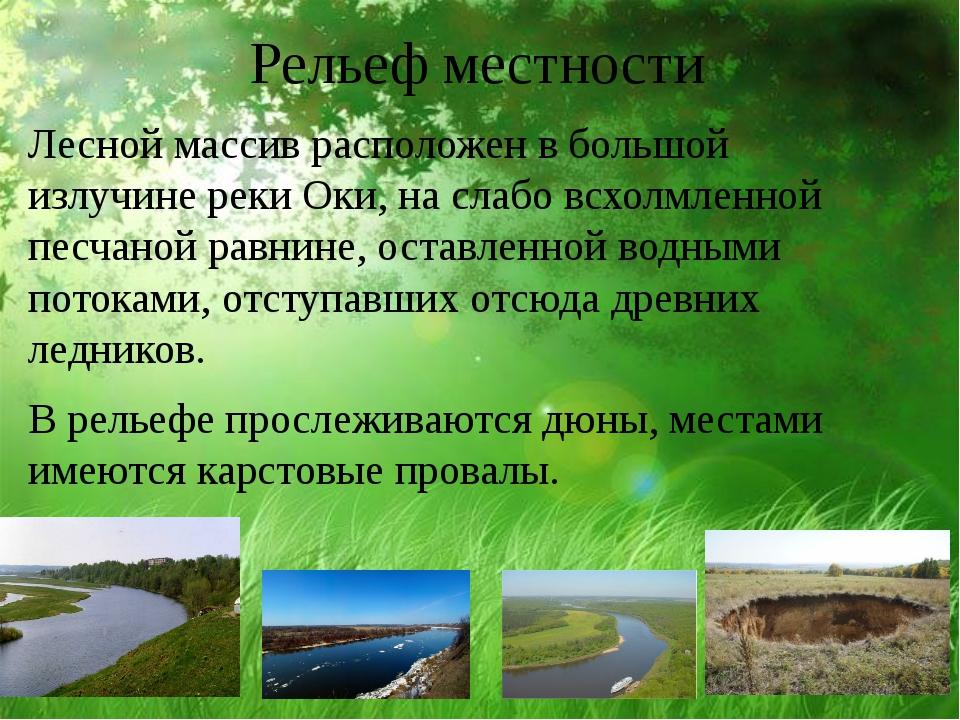 Рельеф местности Лесной массив расположен в большой излучине реки Оки, на сла...