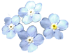 forget-me-not01.gif