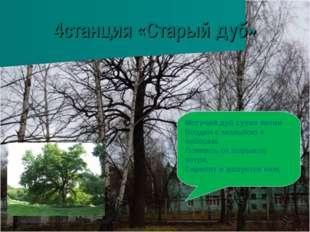 4станция «Старый дуб» Могучий дуб сухие ветви Воздел с мольбою к небесам. Лом