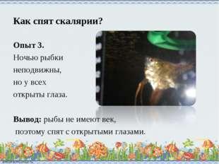 Как спят скалярии? Опыт 3. Ночью рыбки неподвижны, но у всех открыты глаза. В