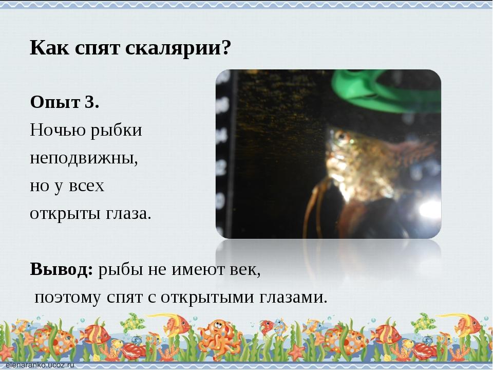 Как спят скалярии? Опыт 3. Ночью рыбки неподвижны, но у всех открыты глаза. В...