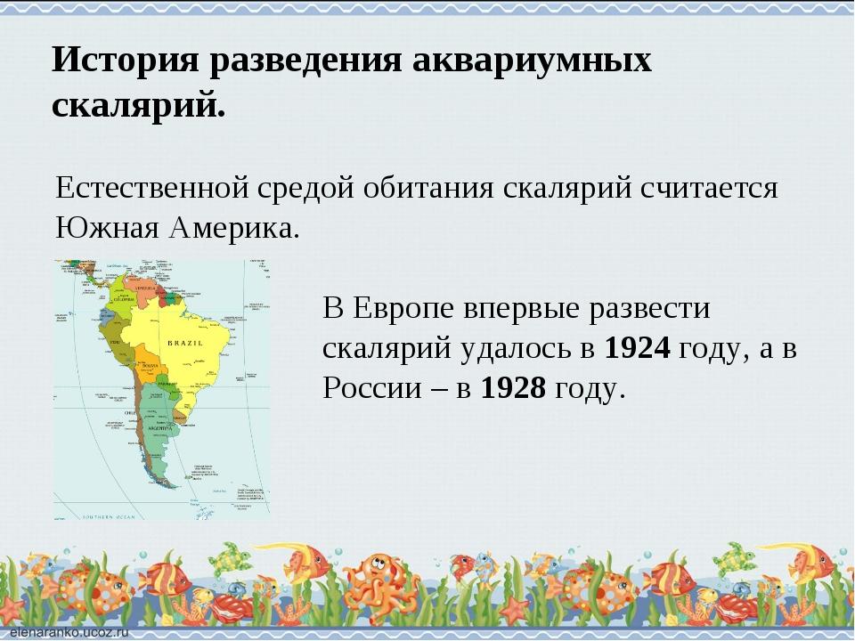 История разведения аквариумных скалярий. Естественной средой обитания скаляри...