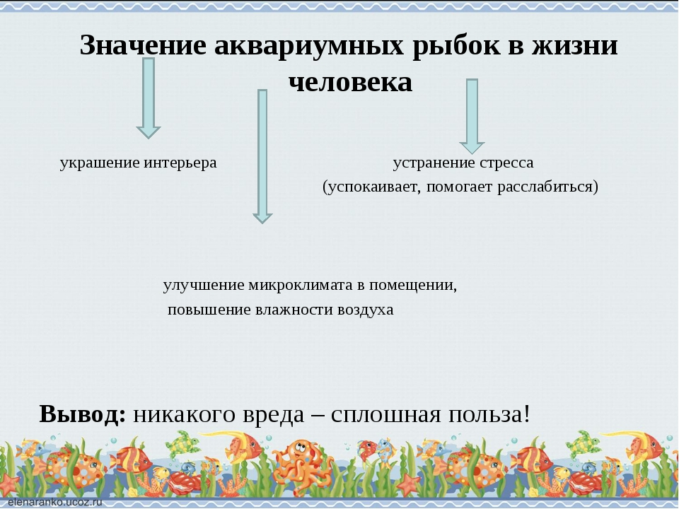 Значение аквариумных рыбок в жизни человека украшение интерьера устранение с...