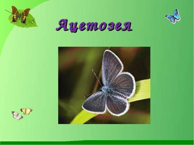 Ацетозея