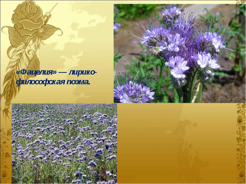 «Фацелия» — лирико-философская поэма.