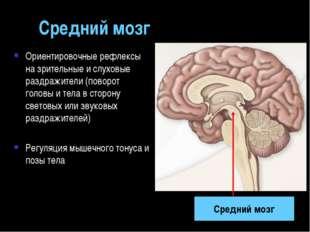Средний мозг Ориентировочные рефлексы на зрительные и слуховые раздражители (