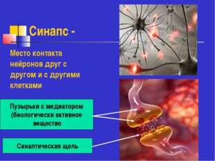 Синапс - Место контакта нейронов друг с другом и с другими клетками Пузырьки