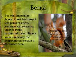 Заяц-беляк Зайца называют «трусишкой», он очень быстро бегает. Для зайца-беля