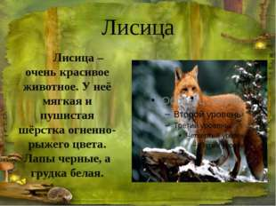 Береги природу, охраняй животных, Человек! Спасибо за внимание!