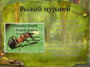 Ящерица живородящая Живородящая ящерица имеет размер 18см, из которых 11см
