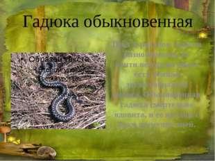 Глухарь ГЛУХАРЬ – большой лесной петух. Весной глухари начинают токовать – пе