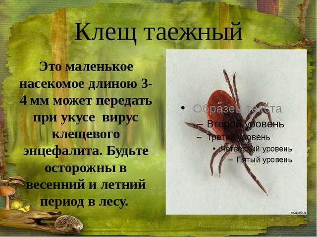 Гадюка обыкновенная Цвет и рисунок гадюки разнообразны, но почти всегда на сп...