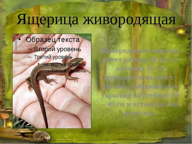 Кукушка Птица средних размеров (длина тела до 40 см, с довольно длинным (до 1...