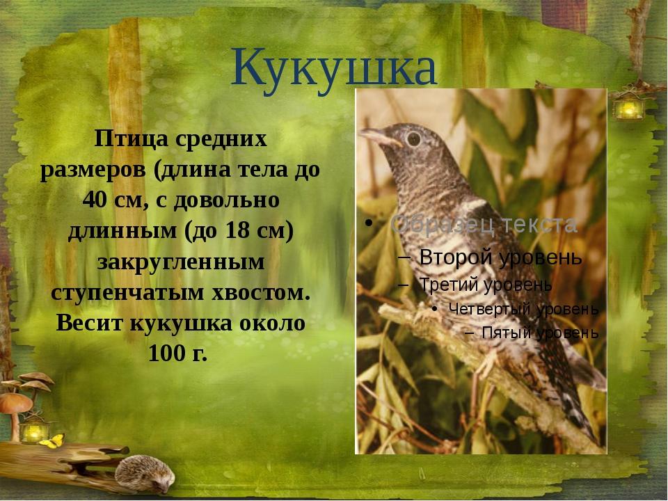 Сова Совы – очень полезные птицы. В годы, когда мышей бывает много, совы охот...