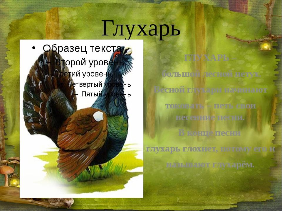 Белка-летяга Обыкновенная летяга селится в лесах. Хвост – самое важное приспо...