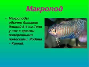 Макропод Макроподы обычно бывают длиной 5-6 см.Тело у них с яркими поперечным