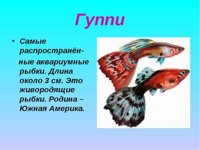 Гуппи Самые распространён- ные аквариумные рыбки. Длина около 3 см. Это живор...