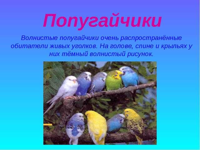 Попугайчики Волнистые попугайчики очень распространённые обитатели живых уго...