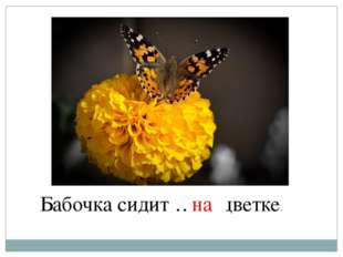 Бабочка сидит … цветке. на